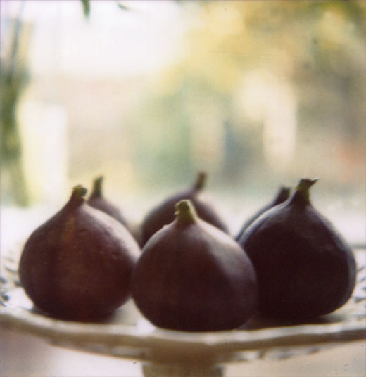 figs on polaroid