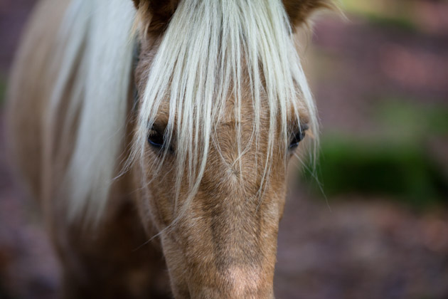 blonde pony