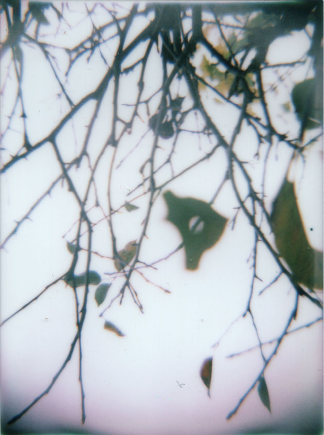 apple tree branches - diana + instant back