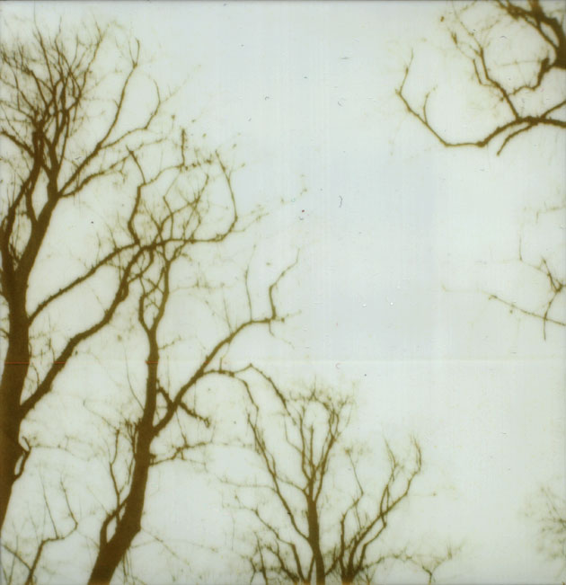 polaroid winter branches