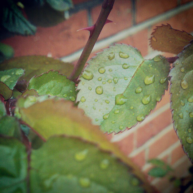 waterdrops on leaves