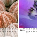 A freebie 2013 calendar template for your photos