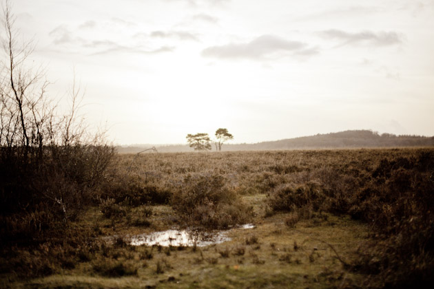 boggy heathland - New Forest