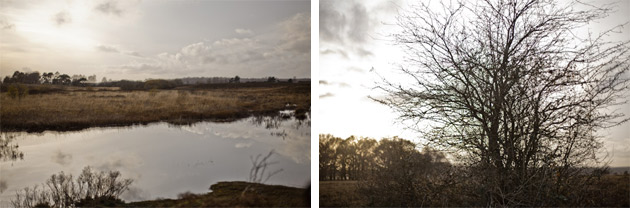 landscape - New Forest
