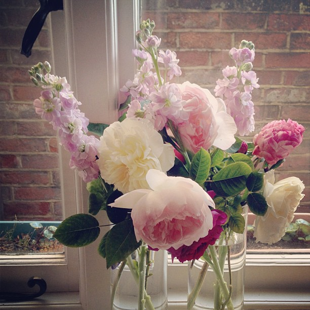 instagram roses
