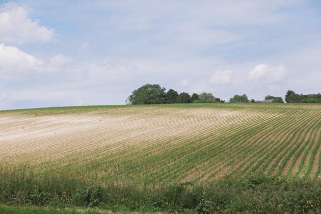 alton - hampshire - dry field