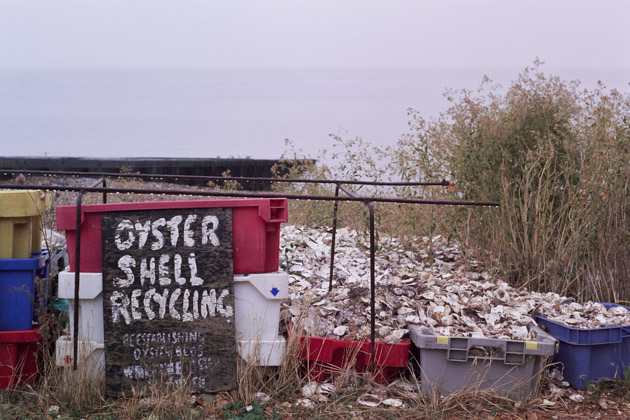 oyster shells, whitstable - pentax k1000