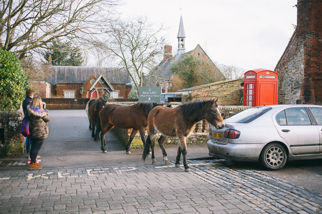ponies walking out of Beaulieu school