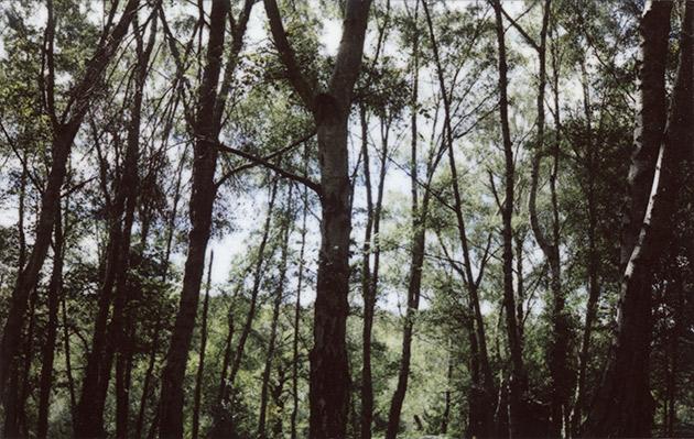 fuji instax 200 - forest