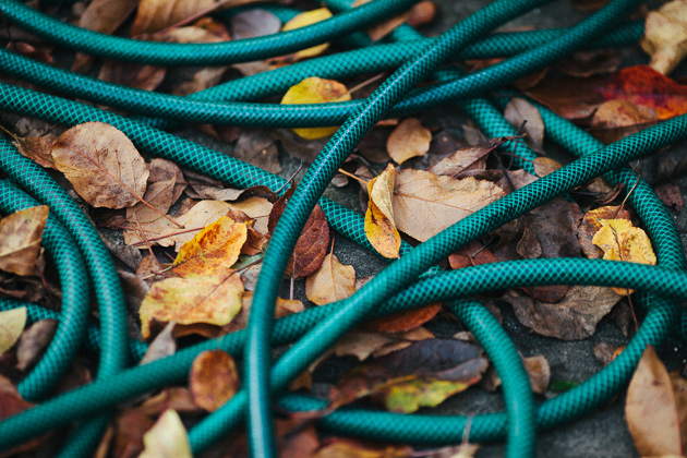 hose pipe and leaves