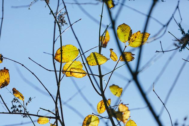 yellow ones