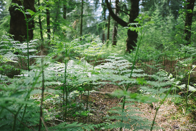 new ferns in the New Forest